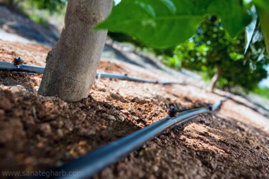 آبیاری قطره ای باغ میوه