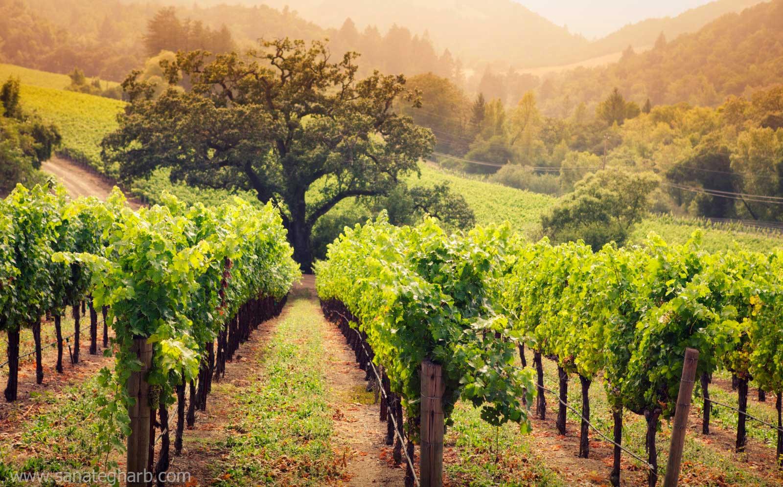 آبیاری مدرن محصولات کشاورزی